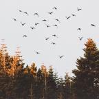 The Snowbird Phenomenon